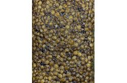 Carpfishingonline Tiger Nut Cotte